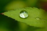Raindrops  ~  May 30  [28]