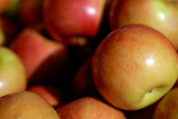 Apples  ~  September 14  [9]