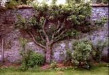 Garden, Traquair House