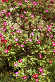 Garden, Hardwick Hall