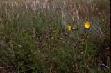 Wild Flowers, Glenbrittle