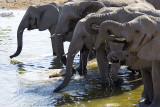NAMIBIA : 15 ELEPHANTS PLAYING IN A WATER HOLE