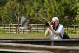 Photographer and heron in flight
