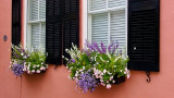 Window Boxes Charleston SC