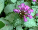 ants on purple flower