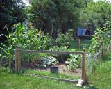 garden Aug 2