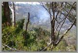 Bushfire (WILDFIRE) on the backroads...