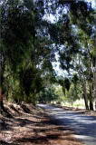 Indigenous trees & scrub on the back roads...