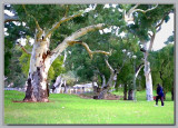 Ancient trees in the park