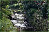 Aldgate creek and camellias