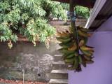 regime de banane