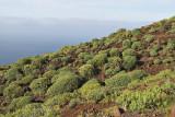 Typical vegetation