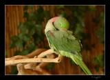 Aviary 001