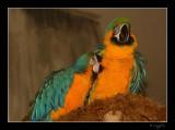 Aviary 018