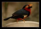 Aviary 022