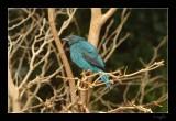 Aviary 028