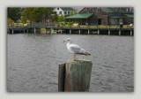 Roanoke Island 026