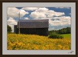 Countryside 02