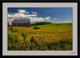 Countryside 08