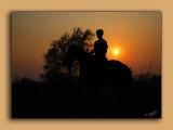 Horseback in the sunset