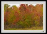 Autumn Colors 07
