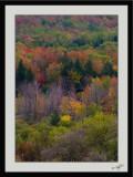 Autumn Colors 14