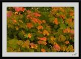 Autumn Colors 24