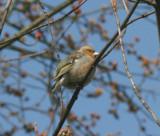 Little bird is a bit tatty around the feathers,