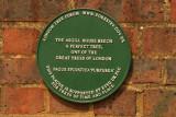 The Asgill House Beech.