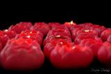 Red, Burning Lotus