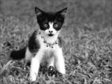 Kitty...meow