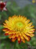 Full Bloom