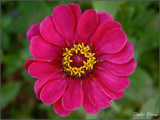 Pretty Petals III
