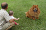 Dogs Also Love  Babies