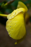 The Water Droplet