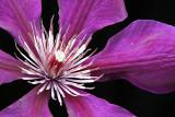 plant_life
