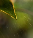 A Leaf's Essence
