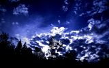Dark Blue Sky with Trees