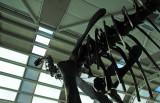 20070311 / chicagosaur