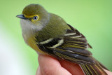 Featherfest Bird Banding, Galveston TX USA, 20070401