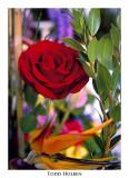 flower.rose.jpg