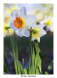 Flower030207.jpg