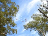 Roulettes between the Gum Trees