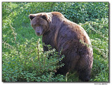 bear-4883-sm.jpg