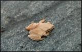 Toad back