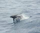 Galapagos 06 88.jpg
