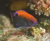 Galapagos 06 74.jpg