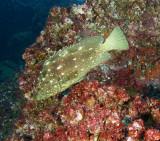 Galapagos 06 36.jpg