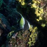 Galapagos 06 78.jpg