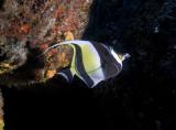 Galapagos 06 79.jpg